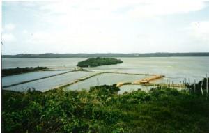 Ilha 1